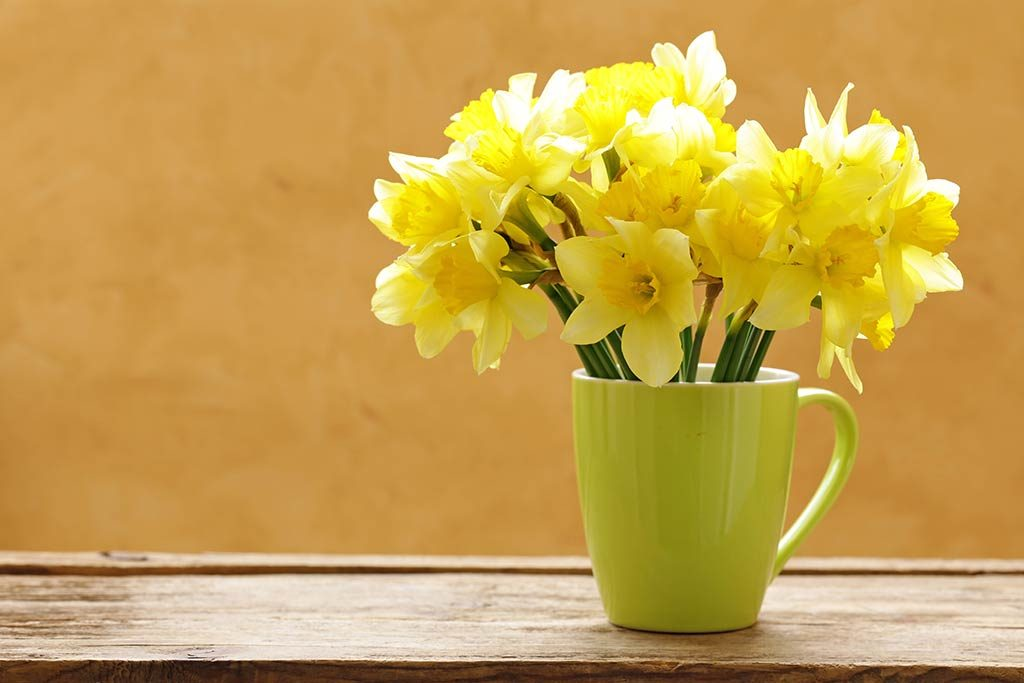 Daffodils for Welsh Rate of Income Tax 2019 page